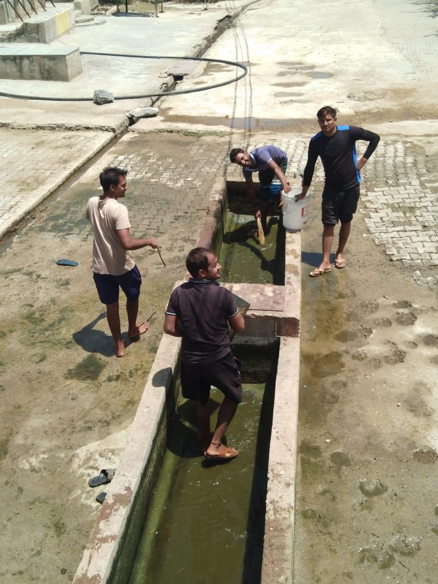 युवाओं ने पशुओं के लिए की पानी की व्यवस्था