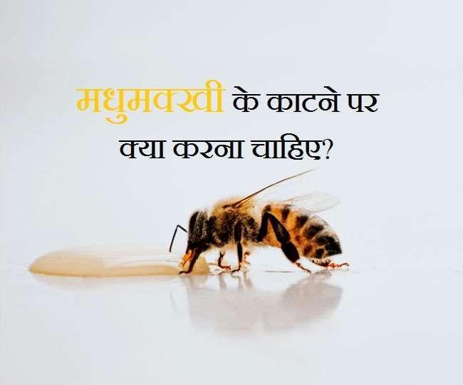 मधुमक्खी के काटने पर आज़माएं ये 6 घरेलू उपाय...